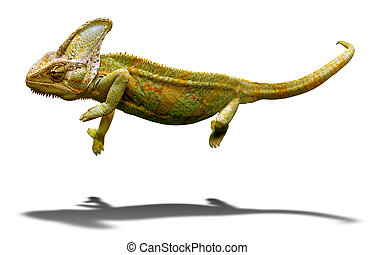 Colorful chameleon closeup isolated on white with shadow