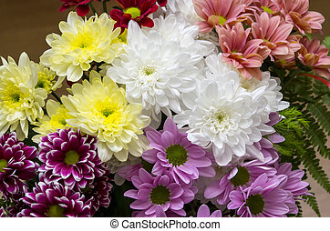 Colorful Chrysanthemum flowers
