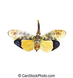 colorful cicada isolated on white background