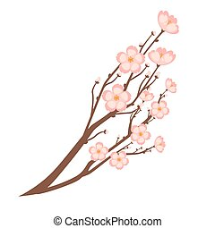 Colorful close up sakura branch isolated on white