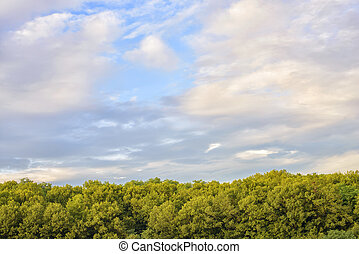 colorful cloudy sky with green trees in the evening