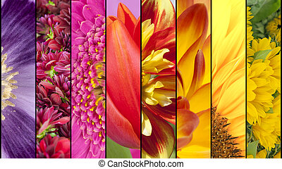 Colorful collage of flower textures