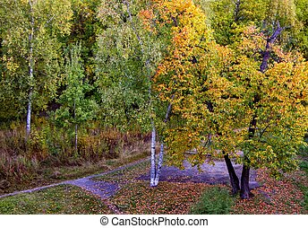 Colorful colored trees in the autumn park