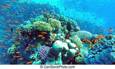 Colorful coral mount teeming with shoals of beautiful fish...