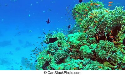 Colorful coral mount teeming with shoals of fish - Colorful ...
