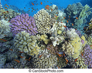 Colorful coral reef at the bottom of tropical sea, underwater landscape