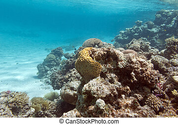 coral reef under the surface of water in tropical sea, underwater