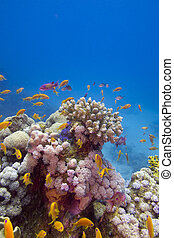 Colorful coral reef with exotic fishes at the bottom of red sea