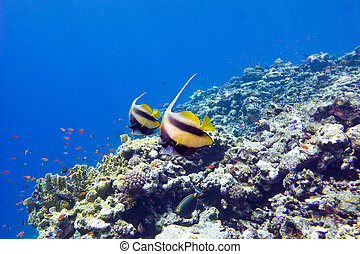 colorful coral reef with exotic fishes at the bottom of tropical
