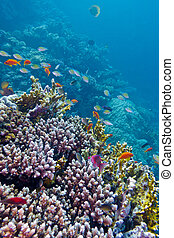 colorful coral reef with exotic fishes at the bottom of tropical sea
