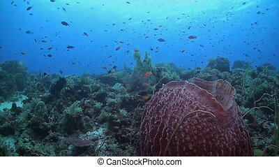 Colorful coral reef with many fish. Anthias, Angelfish and Damselfish