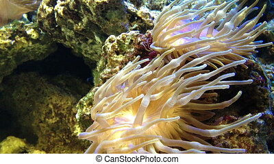 Colorful coral reef with school of
