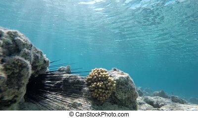 Colorful corals. Underwater, Ocean,
