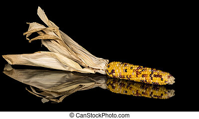 Colorful corn that is of the Indian style