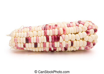 colorful corn with clipping path