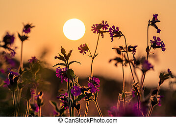 Pink flowers on the colourful meadow in Cornwall at dusk