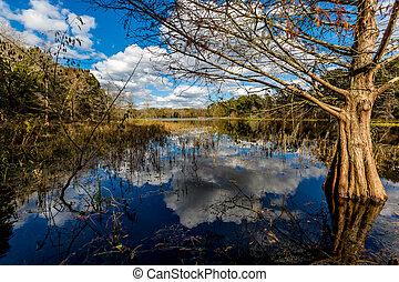 Colorful Creekfield Lake at Brazos Bend Texas - Reflections ...