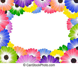 Colorful Daisy Flowers Around Edge of Frame - Colorful...