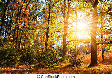 Colorful deciduous tree in autumn forest.