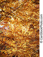 colorful deciduous tree leaves in autumn forest - background...
