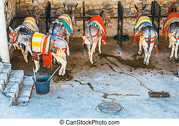colorful decorated donkeys famous as Burro-taxi waiting for...