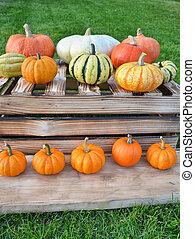 Colorful decoration of pumpkins
