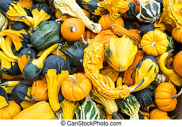 Colorful decorative gourds on display