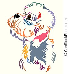 Colorful decorative portrait of Dandie Dinmont Terrier Dog vector illustration