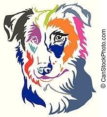 Colorful decorative portrait of Dog Border Collie vector illustration