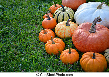Colorful decorative pumpkins on the grass
