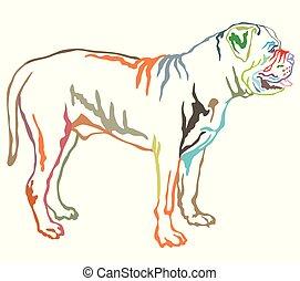 Colorful decorative standing portrait of Boerboel vector illustration