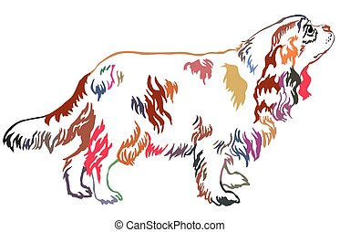 Colorful decorative standing portrait of dog Cavalier King Charles Spaniel vector illustration