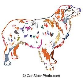 Colorful decorative standing portrait of dog Australian shepherd vector illustration