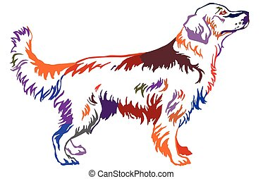 Colorful decorative standing portrait of dog golden retriever, vector illustration