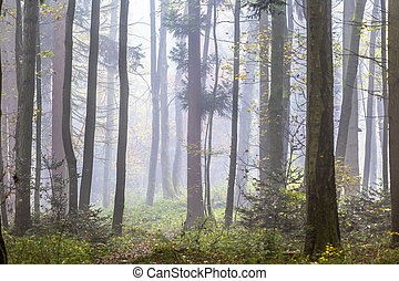 detail of trees in foggy forest