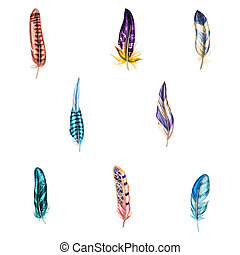 Colorful detailed bird feathers, isolated on white background.  illustration.