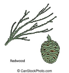 Colorful Drawing Redwood Or Sequoia Concept - Colorful...