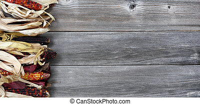 Colorful dried corn on left border of aged wood for the Thanksgiving Autumn holiday season