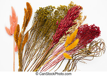 colorful dried flowers on white background closeup