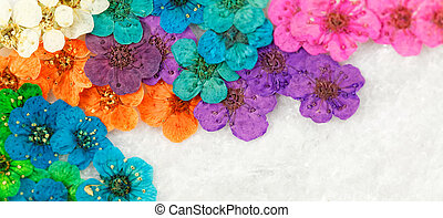 Colorful dried spring flowers