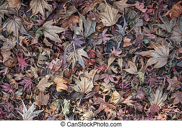 colorful dry autumn leaf. background