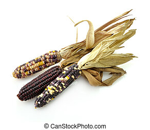 Colorful Dry Corn Cobs On White Background