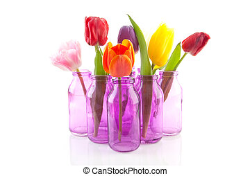 colorful Dutch tulips in little pink vases