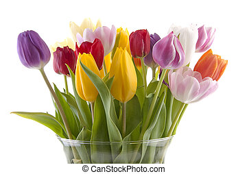 colorful Dutch tulips in vase