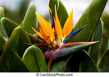 Colorful exotic flowers in a garden