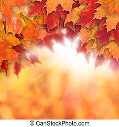 Colorful fall background. Autumn maple leaves and abstract sun light