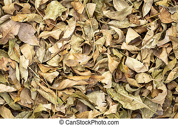 Colorful fall dry leaves background