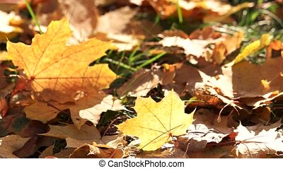 Colorful fall foliage on grass.