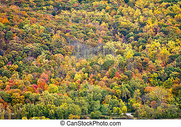 Colorful Fall Forest Background Texture