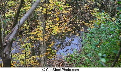 Colorful fall forest with stream